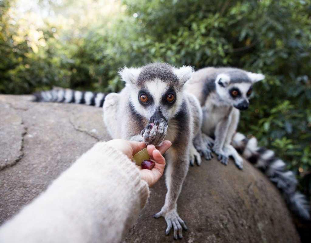 Christchurch Zoo - Willowbank