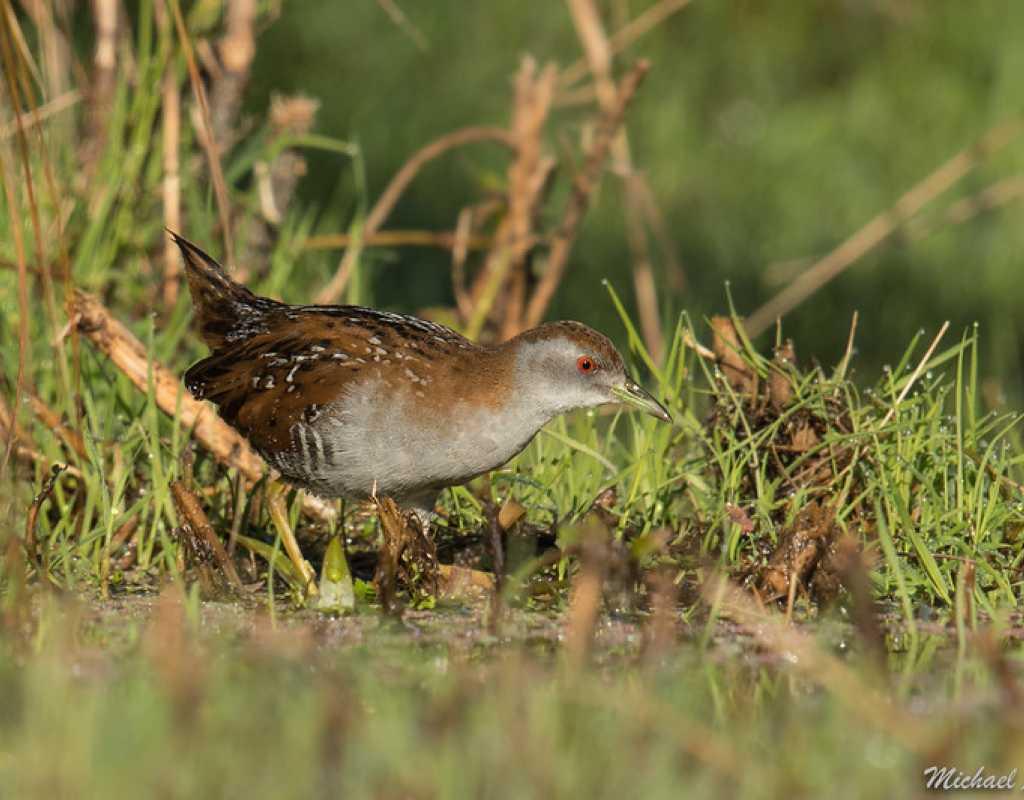 Christchurch Native Birds